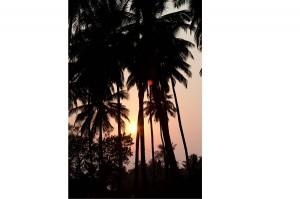 yogimag-inde-palmiers