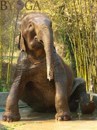 Byoga© elephant yogamat