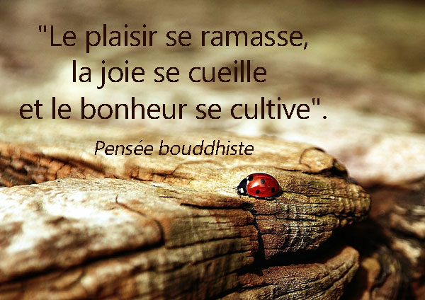 Bien connu Citations : Blog Citations Amour, Méditation, Yoga, Bouddhiste JX23