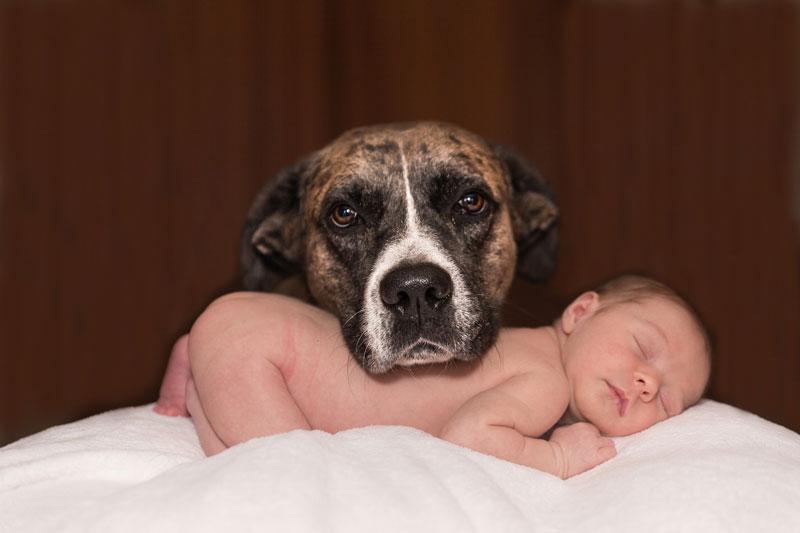 bebe et animal