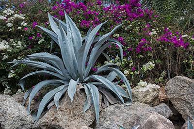 Plantes médicinales pour guérir