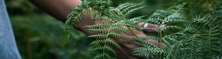 Les plantes médicinales et les seniors : un bon ménage